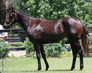 Yankee Rose as a yearling