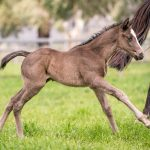 Image x Trapeze Artist - Filly